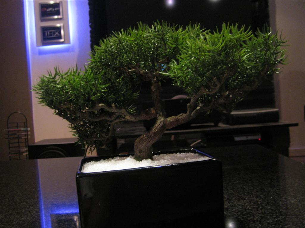 Bonsai_1%20(Medium).jpg